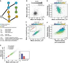 Cell Cycle Pie Chart Genomewide Phenotypic Analysis Of Growth Cell Morphogenesis