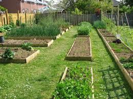 vegetable gardening for beginners how