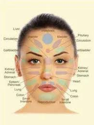 face anatomy anatomy of skin on face 25 best massage images pinterest human the