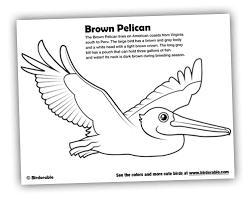 Small Picture Birdorable Coloring Page Brown Pelican Beach Related Art Ideas
