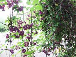 20 Green Fence Designs Plants To Beautify Garden Design And Yard Climbing Plants For Fence