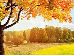 Three Autumn Fallen Leaves Powerpoint Background Picture 1001ppt Com