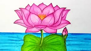 Lotus Flower Color Chart How To Draw Lotus Flower Step By Step Easy Draw For Children Kids Beginners