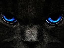 black tiger with blue eyes wallpaper. Simple Tiger BlackCatBlueEyes And Black Tiger With Blue Eyes Wallpaper C