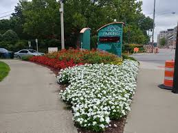 2018 midwest floriculture field trials results cincinnati zoo and botanical garden