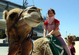 Image result for Camel newcastle
