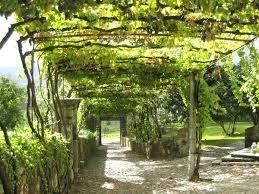 Post navigation. Backyard Grape Trellis Design