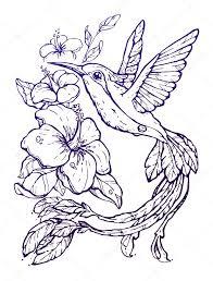 нарисованная колибри колибри нарисованная красивые иллюстрации с