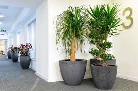 interior landscaping office. Delighful Landscaping Radial Planters At Aberdeen City Councilu0027s New Corporate Headquarters In  Marischal College For Interior Landscaping Office