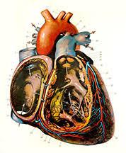 American Frohse Anatomical Charts Key Unit Three