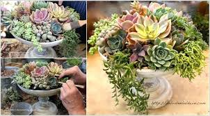 succulent planter ideas cool for your home 9 wall box diy
