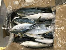 China New Landing Seafood Frozen ...