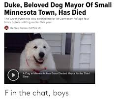 Duke Beloved Dog Mayor of Small Minnesota Town Has Died the Great Pyrenees  Was Elected Mayor of Cormorant Village Four Times Before Retiring Earlier  This Year by Hilary Hanson HuffPost Us 0050
