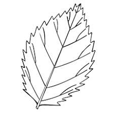 leaf coloring pages. On Leaf Coloring Pages