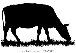 cow silhouette clip art. Modren Cow Silhouette Of Cow Eating Grass  Vector Illustration And Cow Clip Art G