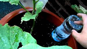 how to make a drip water irrigation system for a container garden you