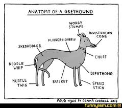 Anatomy Of A Greyhound Funny Pics Funnyism Funny Pictures