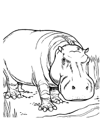 Printable Hippo Coloring Pages Coloringmecom