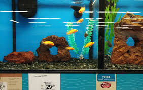 petco freshwater fish. Contemporary Petco Specific Display Stand For Betta Fish Inside Petco Freshwater