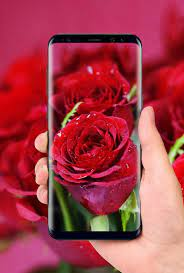 Beautiful Rose Free Live Wallpaper for ...