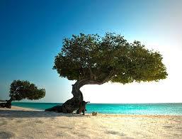 Resultado de imagen para praia mais linda do mundo