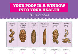 Bathroom Chart For Kids Dr Poos Kid Friendly Bathroom Resource Regular Girl