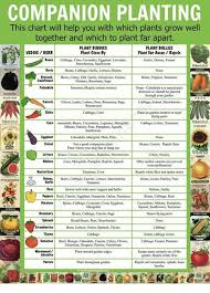 Companion Chart Companion Planting This Chart Will Help You With Which