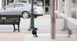 humane society asks city to review handling of stray cat population