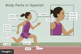Human Body Parts Chart In English What Are The Names For Body Parts In Spanish