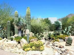 outdoor cactus garden nurseries landscape find this pin and more on cactus garden desert gardens nursery
