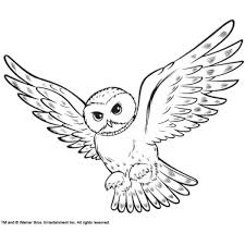 Small Picture Coloring Snowy Owl Hedwig picture liked on Polyvore featuring