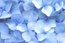 Aesthetic Pastel Blue Flower Wallpaper