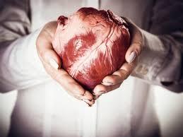 Kết quả hình ảnh cho tim