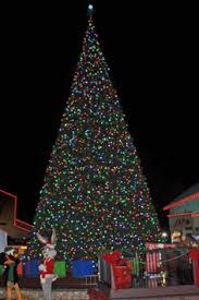 Six Flags Discovery Kingdom Chooses Giant LED Christmas Tree And Energy  Efficient LED Christmas Lights from