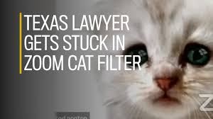 Now i'm famous for appearing in court as a cat. Yq02nia3ya6zim