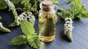 Peppermint oil benefits: Properties and uses