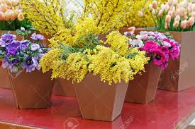 Paper Flower Pots Bouquets Of Beautiful Mimosa Anemone And Forsythia Flowers In