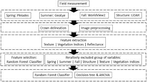 Tree Identification Chart Flowchart Of Identifying Tree Species In Fef Download