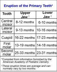 The Newborns Growth Patterns And Teething Howstuffworks