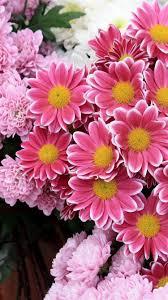 iphone 6 wallpaper pink flower. Brilliant Flower Fresh Pink Flowers IPhone 6 Wallpaper On Iphone Pink Flower