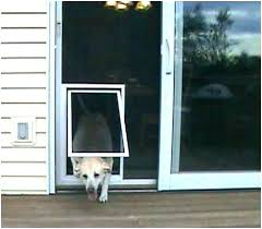 doors with pet door security door with dog door pet door sliding glass sliding glass dog doors with pet door pet door gallery sliding glass