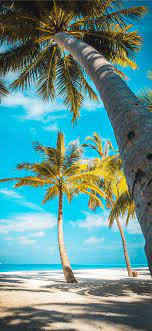iPhone 4k Palm Trees Wallpapers ...