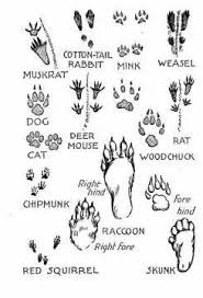 Paw Print Identification Chart Animal Activities For Kids