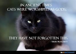 Cats Quotes Impressive Cat Quotes