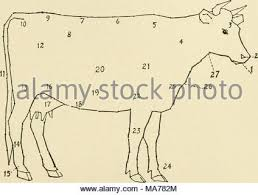 elementary agriculture fig 121 diagram of a cow 1 muzzle 2