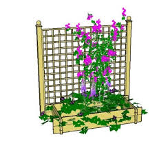 How To Choose The Best Climbing Vines For A Trellis  The Climbing Plant Trellis
