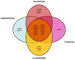 A Complement Venn Diagram Venn Diagram Of The Type Iii Effector Gene Complements Of