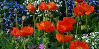 how to start a flower garden 3 steps
