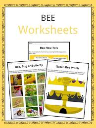 Insect Facts, Worksheets & Resources For Kids
