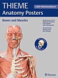 Thieme Anatomy Posters Bones And Muscles Latin Nomenclature